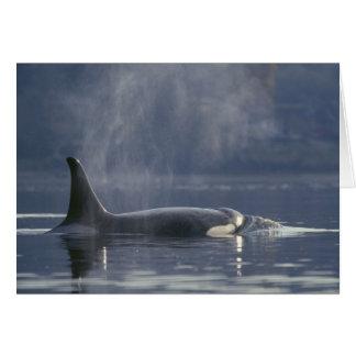 Cartes Orque d'Orcinus de baleine d'orque de femelle