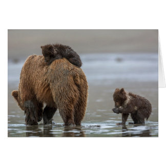 Cartes Ours et petits animaux de Brown