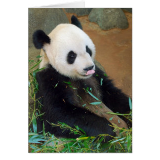 Cartes Ours panda