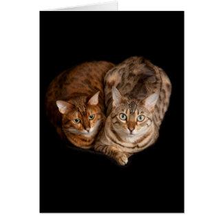 Cartes Paires de chatons du Bengale