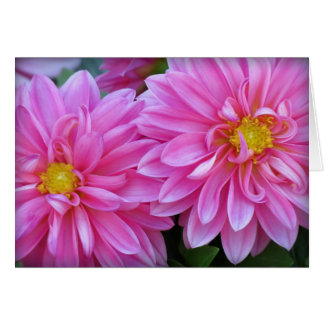 Cartes Paires de dahlia dans le rose