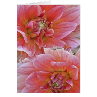 Cartes Paires de fleurs de dahlia, espèces de dahlia,