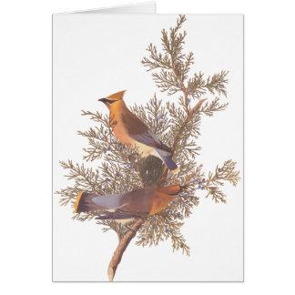 Cartes Paires d'oiseau de jaseur de cèdre d'Audubon sur