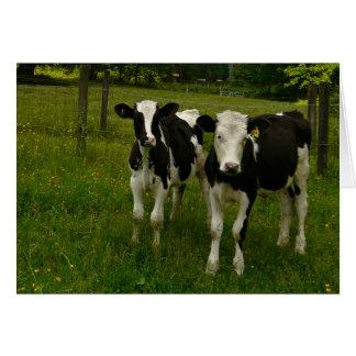 Cartes Paires du Holstein Fresian de boeufs