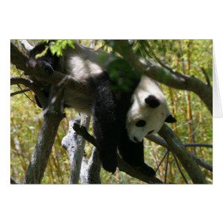 Cartes Panda #4