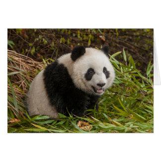 Cartes Panda parmi le bambou