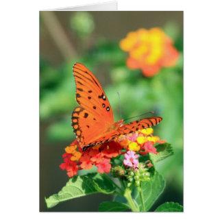 Cartes Papillon