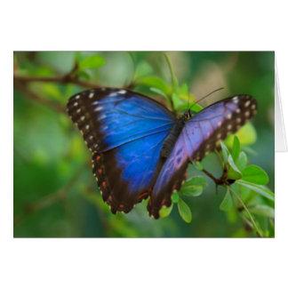 Cartes Papillon bleu