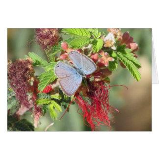 Cartes Papillon bleu marin