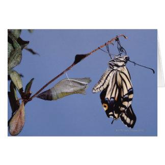 Cartes Papillon de machaon après métamorphose