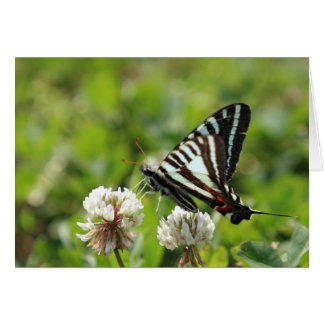 Cartes Papillon de machaon de zèbre