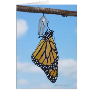 Cartes Papillon de monarque, avec Chrysalis