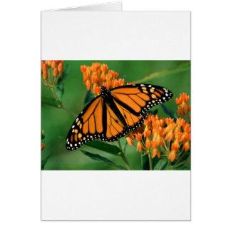 Cartes papillon de monarque de papillons