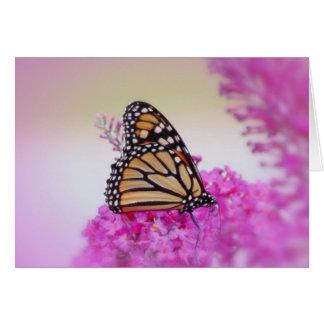 Cartes Papillon de monarque de septembre