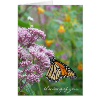 Cartes Papillon de monarque sur le fleur sauvage