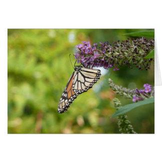 Cartes Papillon de monarque sur le papillon Bush pourpre