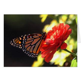 Cartes Papillon de monarque sur le Zinnia rouge