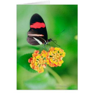 Cartes Papillon de rosina de facteur rassemblant le