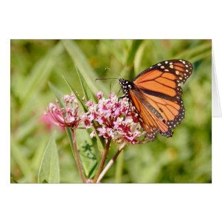 Cartes Papillon et ami de monarque