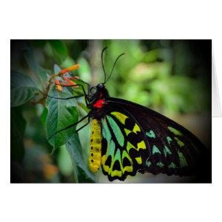 Cartes Papillon et fleurs - nuances de v1 vert
