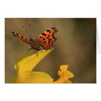 Cartes Papillon et jonquille de virgule