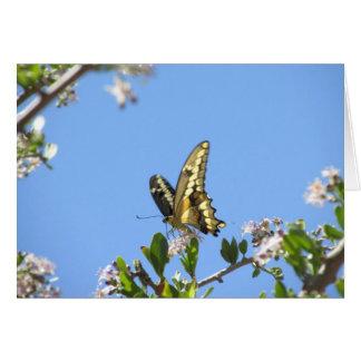Cartes Papillon géant de machaon