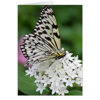 Cartes Papillon horizontal