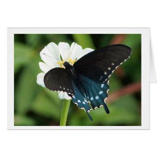 Cartes Papillon oriental de machaon sur le zinnia blanc