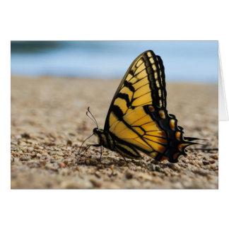 Cartes Papillon sur la plage