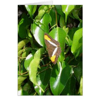 Cartes Papillon sur le vert