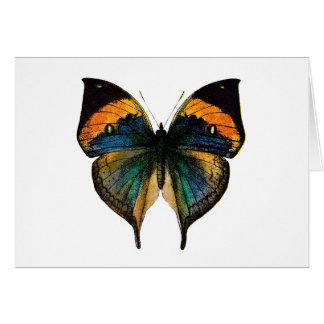 Cartes Papillon vintage - 1800's papillon antique Litho