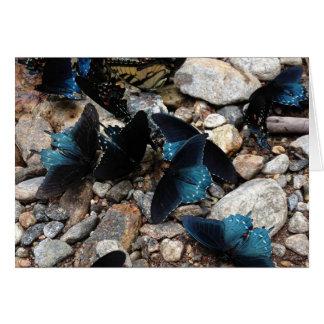 Cartes Papillons