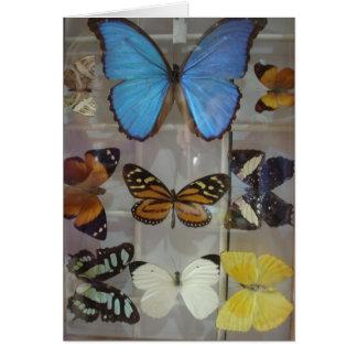 Cartes Papillons du Panama