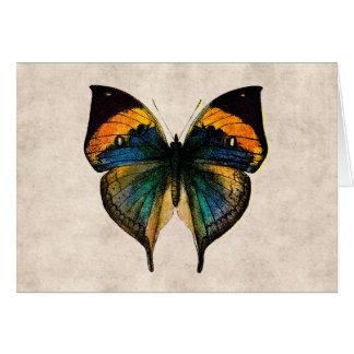 Cartes Papillons vintages de l'illustration 1800's de