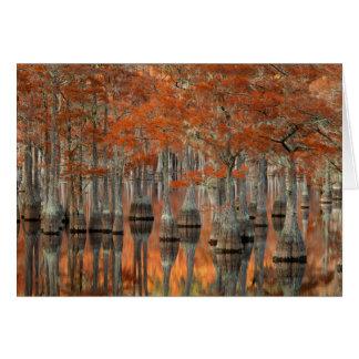 Cartes Parc d'état des arbres de Cypress | George Smith,