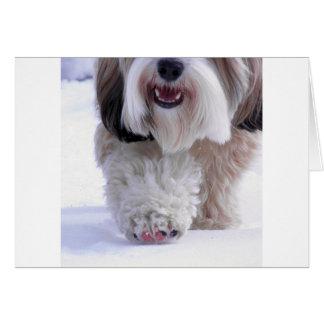 Cartes Patte pelucheuse mignonne de neige de Terrier