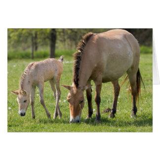 Cartes Pâturage du cheval et du poulain de Przewalski
