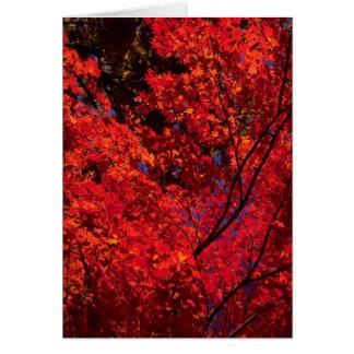 Cartes Paysage coloré d'automne
