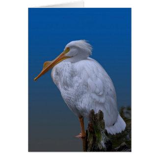 Cartes Pélican blanc américain à l'eau