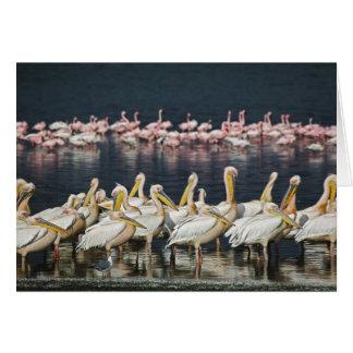 Cartes Pélicans blancs, onocrotalus de Pelecanus, lac