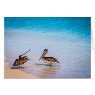 Cartes Pélicans de plage de Bachas