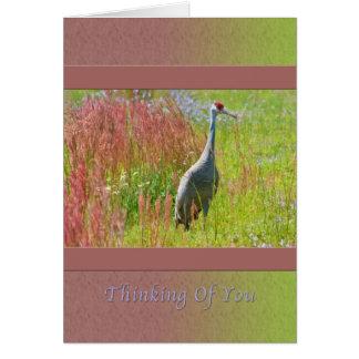 Cartes Pensant à vous, grue de Sandhill, champ des fleurs