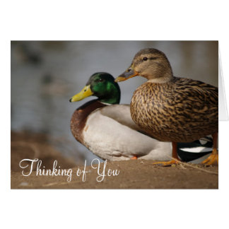 """Cartes """"Pensant à vous"""" se penche"""