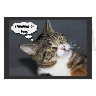 Cartes Pensée à vous avec la photo d'un chat mignon