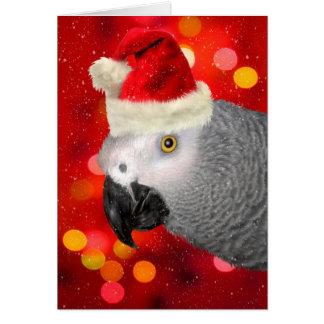 Cartes Perroquet de gris africain en blanc de casquette