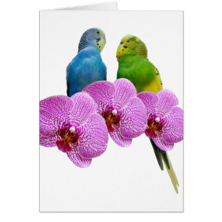 Cartes Perruche avec l'orchidée pourpre