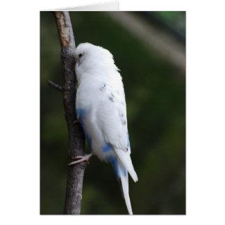 Cartes perruche blanche étreignant l'arbre