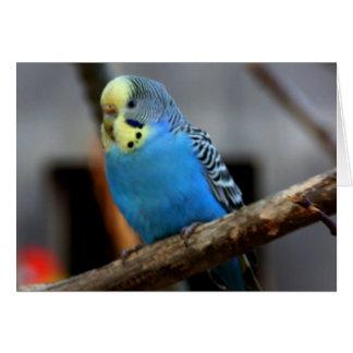 Cartes Perruche bleue
