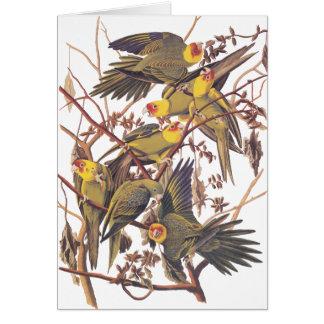 Cartes Perruche de Caroline d'Audubon
