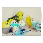Cartes Perruches de Pâques